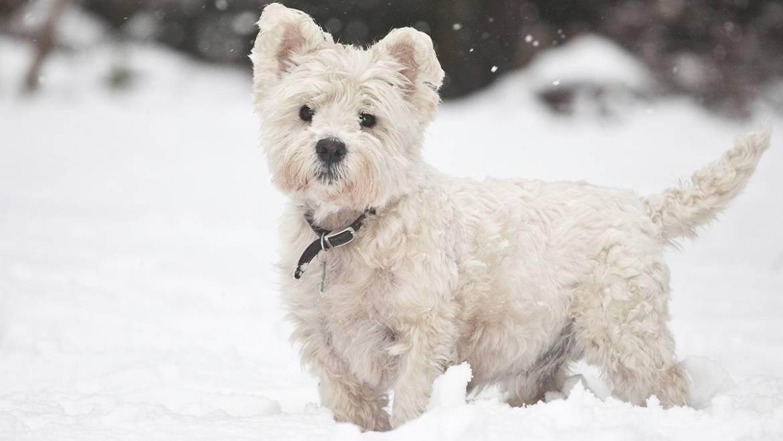 Cum pregătim câinele pentru iarnă